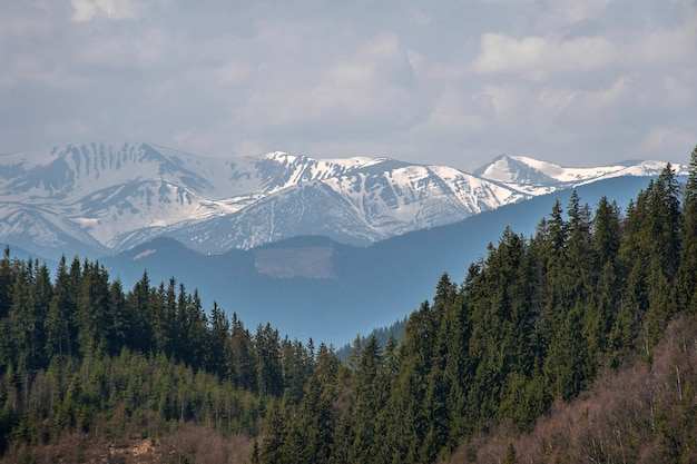 View on green carpathian forest on snowy mountain.