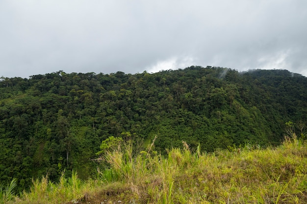 View of green costa rican rainforest