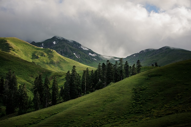 View of the green hills under the clouds with evergreen trees in the middle