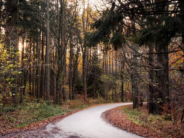 혼합 침엽수 림, 폴란드에서 가을 도로에서보기