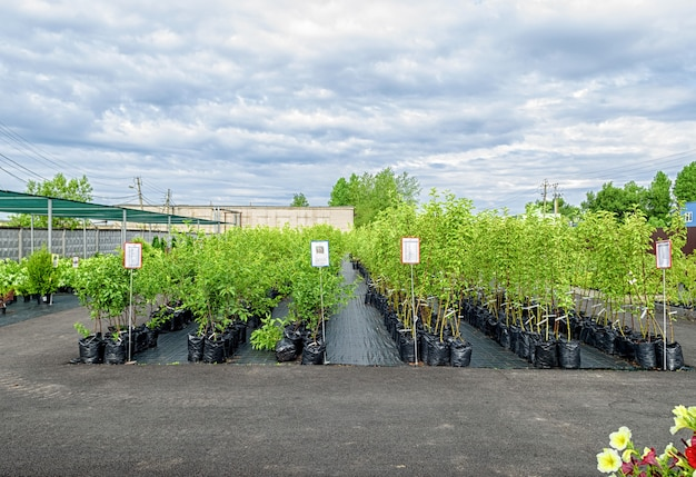 多数の果樹や低木がある苗床の列を見る