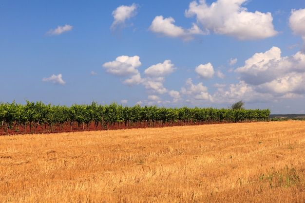 View of istrian countryside