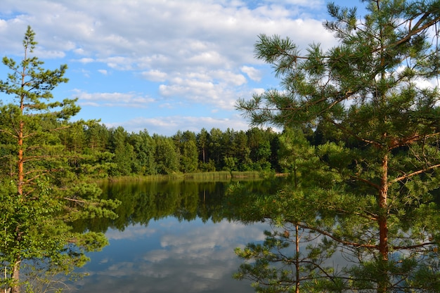 View of the lake through pine branches. blue lakes in chernihiv region, ukraine