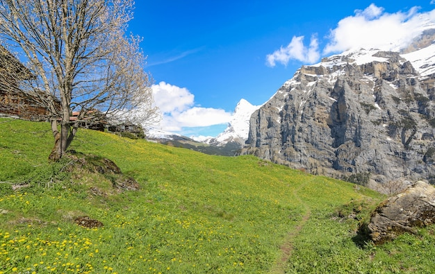View of landscape in the alps at gimmelwald & murren villages in switzerland