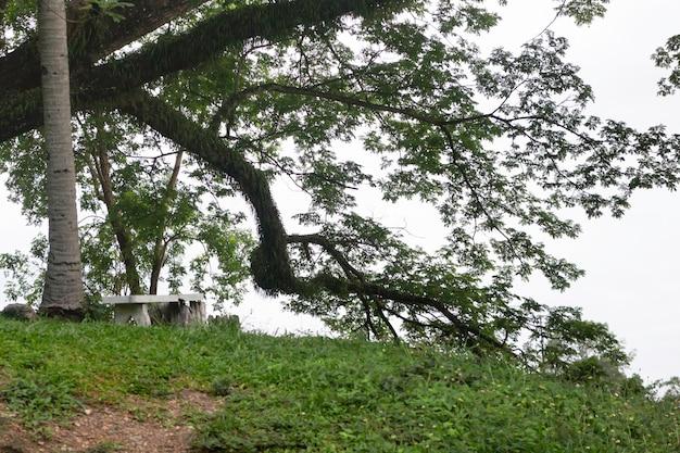 공원에서 조경 나무 식물 보기, 스톡 사진