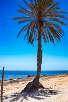 View of the mediterranean coast with blue sea, white sand and a  palm tree