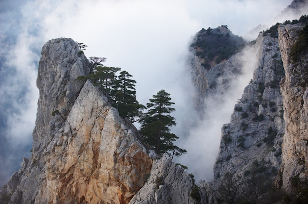 View of misty fog mountains - rock with pine tree