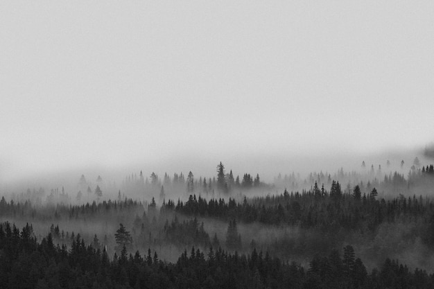 View of the misty woods in norway