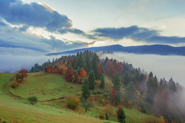 View of mountain forest sunrise with dramatic cloudy sky on background.
