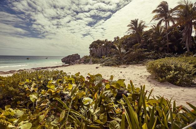 空と海の青に緑豊かな植生とヤシの木がある美しいカリブ海のビーチの眺め。