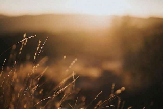 茶色の芝生のフィールドのビュー