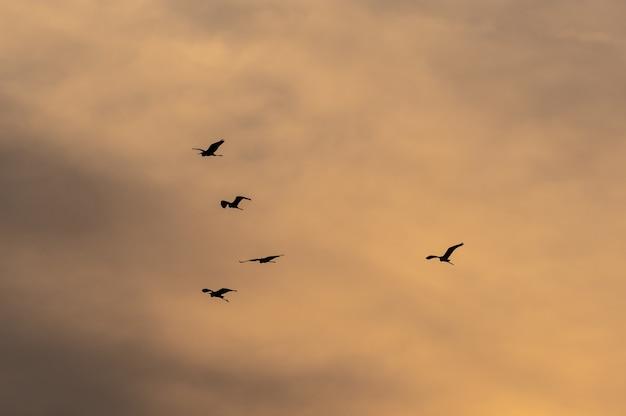 일몰 동안 아름다운 하늘로 날아가는 새들의 무리보기