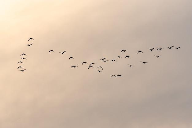 日没時に美しい空に飛んでいる鳥の群れのビュー