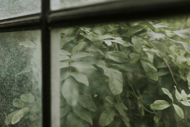 Вид на сад через оконное стекло