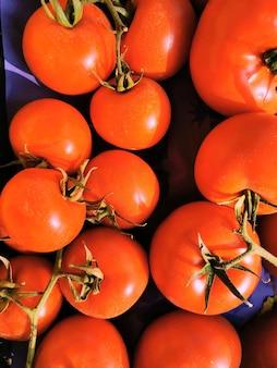 토마토 그룹보기