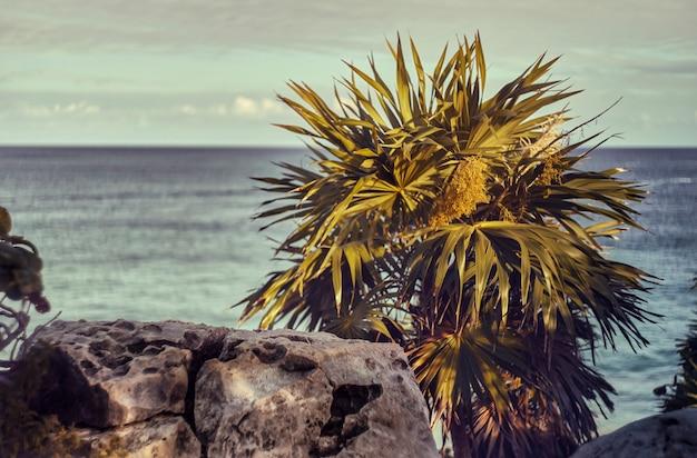 メキシコのカリブ海を見下ろす崖の上に生えている夕日に照らされたヤシの木の眺め。