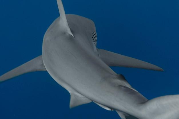 水中を泳ぐサメの眺め