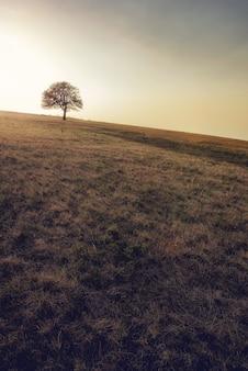 Вид на одно дерево, растущее на лугу у горы раджац, сербия