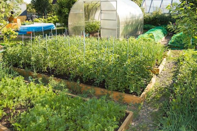 トマト、ニンジン、半円形のポリカーボネート製温室の野菜ベッドがある野菜畑の眺め。ホームガーデニング。