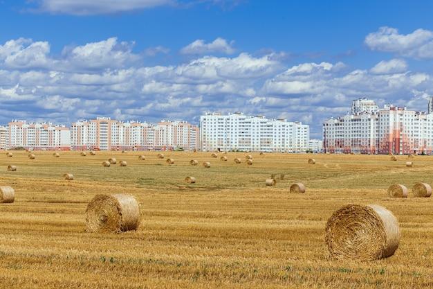 都市の背景に大きな黄色いわら俵と広い収穫フィールドのビュー。