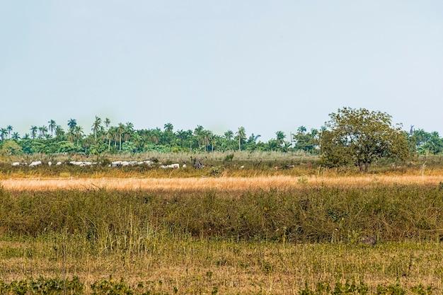 アフリカの自然の風景の眺め