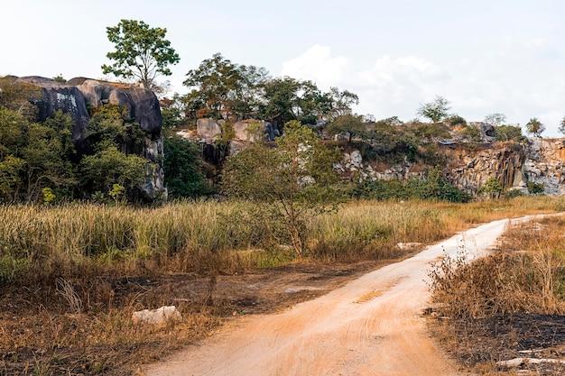 木々や車道のあるアフリカの自然の風景の眺め