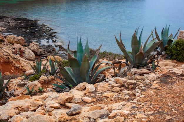 Вид агавы рядом с морем, лампедуза