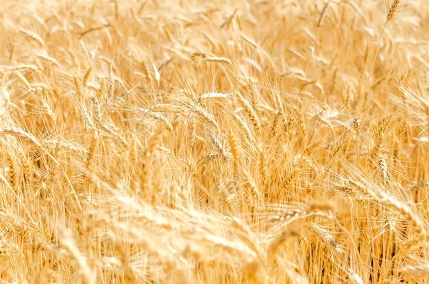 収穫のある農地の眺め