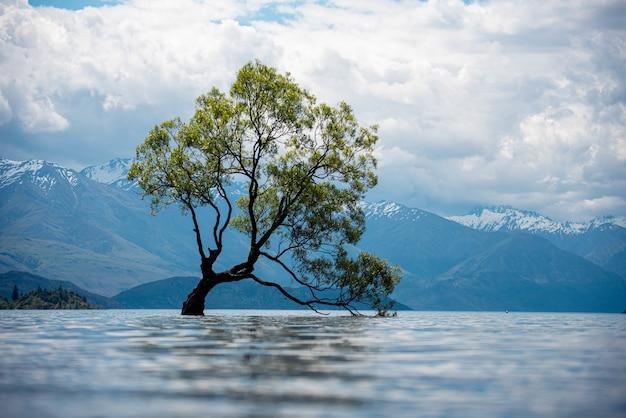 흐린 날에 눈 덮인 산들과 호수에있는 오래된 나무보기