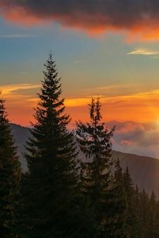 산에서 아름 다운 밝은 일몰의 전망. 극적인 노란 하늘 배경에 전나무 나무의 실루엣. 숲에서 저녁의 개념입니다.