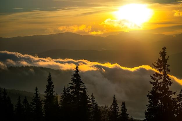 Вид на захватывающий рассвет в хвойном лесу. силуэты елей с волшебным небом на фоне. понятие красоты природы.