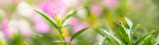 Вид коричневой стрекозы на зеленом листе с размытым розовым цветком в качестве фона