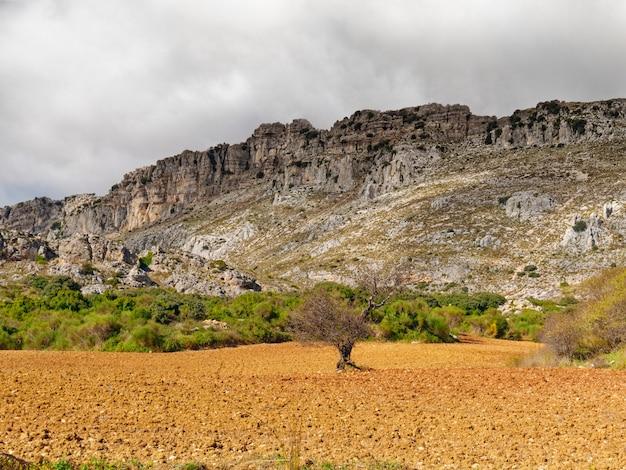 エル トルカル デ アンテケラの麓の茂みと植生の眺め。