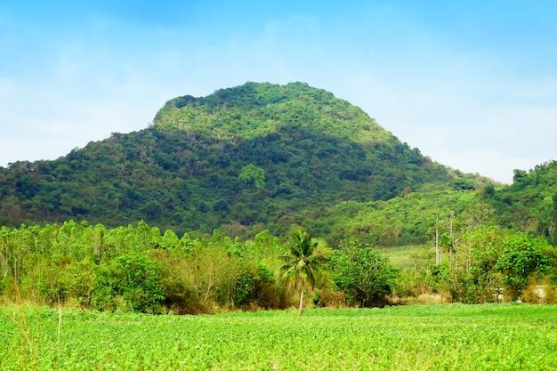 Вид на плантации маниоки и каучуковые плантации в горах