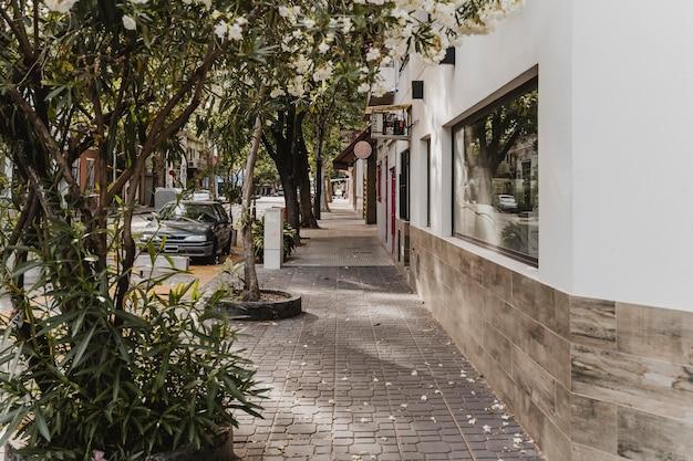 Вид на городскую улицу со зданием и деревьями
