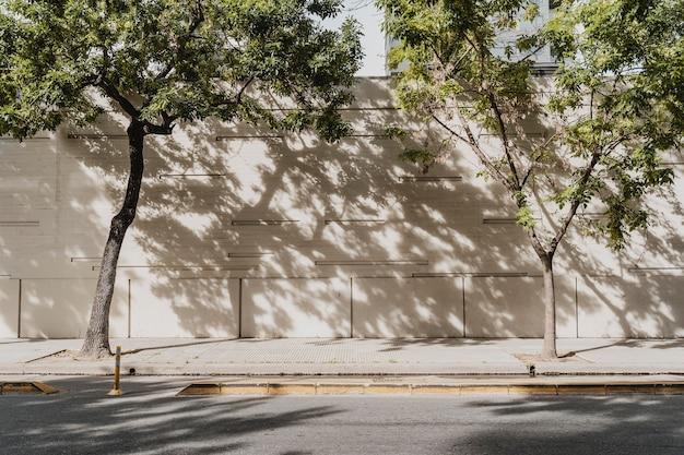 나무와 도시 거리의보기