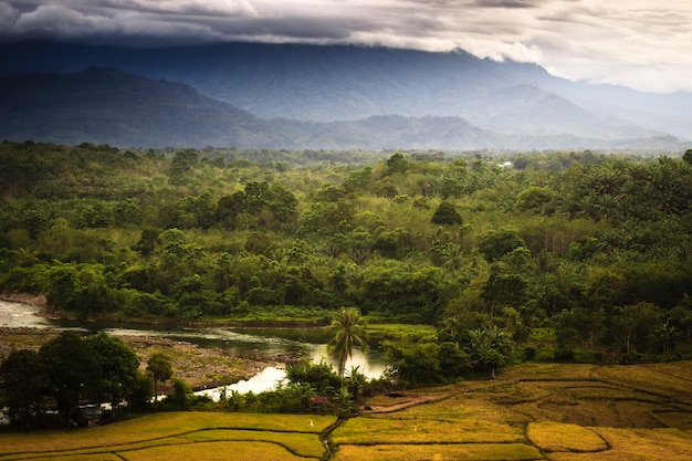 Вид на густой лес и горы утром с речной водой, протекающей в индонезии