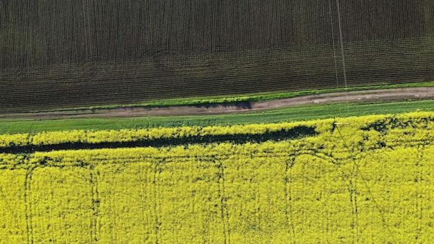 Вид на грунтовую дорогу между желтым цветущим полем рапса и коричневым полем с молодыми побегами