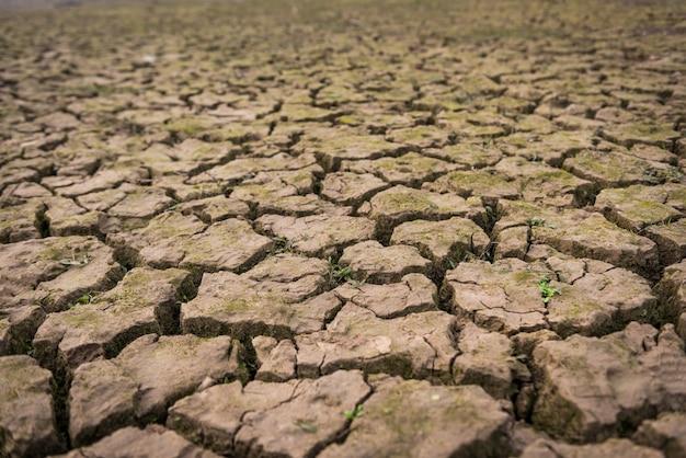 乾燥した割れた泥の眺め
