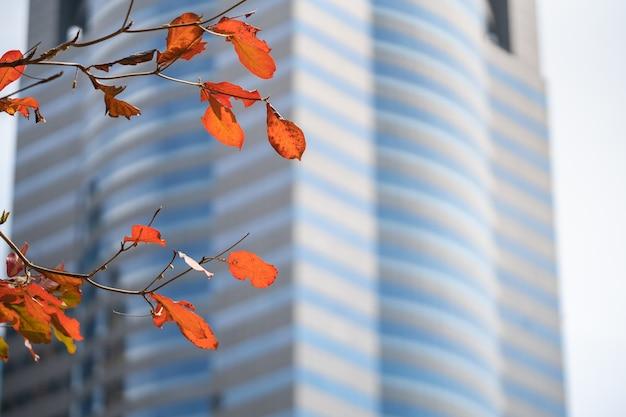 街の秋の季節を背景に、乾燥した赤い葉や小枝、建物の様子。