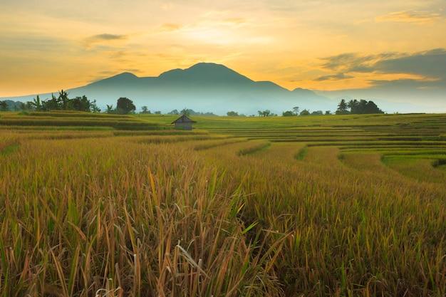 朝のインドネシアの葉の丘のふもとにある乾いた田んぼの眺め