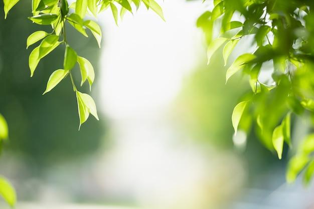 Вид зеленых листьев на фоне размытой зелени