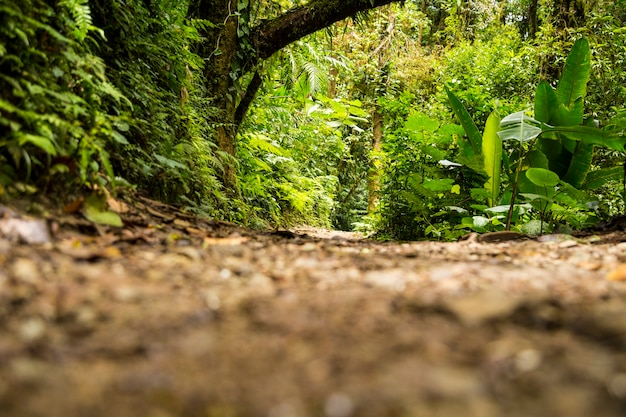 Вид на зеленый тропический лес в сезон дождей