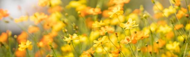 복사 공간 자연 식물 곤충, 생태 커버 페이지 개념 흐린 된 녹색 잎 tableunder 햇빛에 꿀 꿀벌과 노란색 코스모스 꽃의보기.
