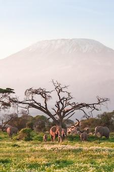 Вид на гору килиманджаро со слонами Premium Фотографии