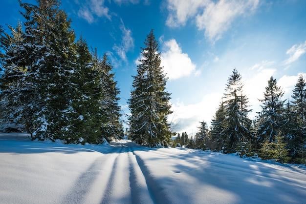 青い空を背景に冬の雪の吹きだまりの丘に生えている雄大な緑のトウヒの木の眺め