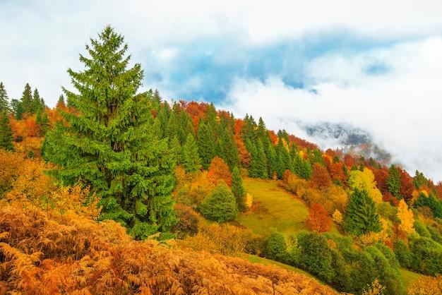 雄大な山林の眺め。カラフルな針葉樹のあるゴージャスな霧の丘。自然の概念。