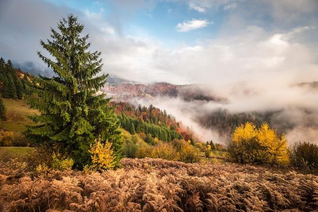 장엄한 산 숲의 전망.