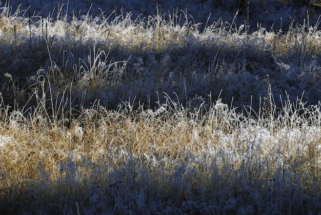 フィールドの牧草地のブルーグラスのビュー