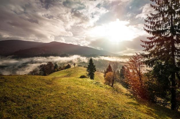 Взгляд восхода солнца горного леса с драматическим облачным небом на предпосылке. красивый пейзаж с хвойными деревьями на луге на склоне холма. понятие о природе.